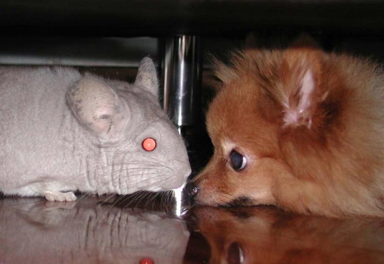 两个好朋友 - 动物篇