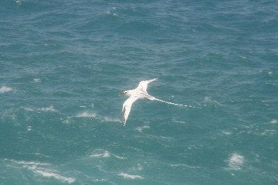 白尾热带鸟 - 地球上最后一片净土—加拉巴哥岛