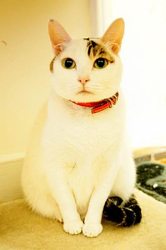 牙疼的猫图片大全可爱