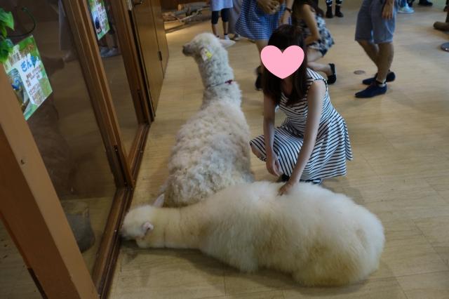 日本关西9天之旅-- 大阪篇 (天保山疯狂动物全接触, 钟意动物既一定好
