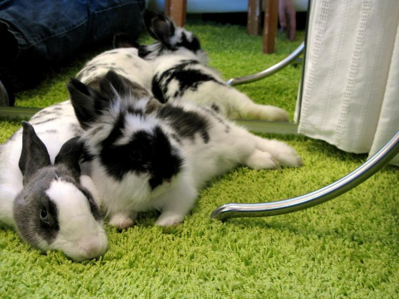 愛我家中小白兔