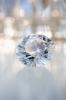 鑽石鑽石亮晶晶
